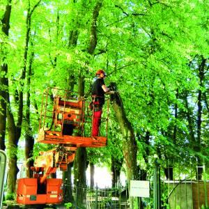 Bij de Vitus kerk in Stiens zijn voor de veiligheid drie bomen omgezaagd