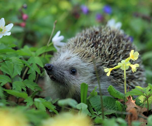 Lezing over biodiversiteit in eigen tuin: 'Groenst'