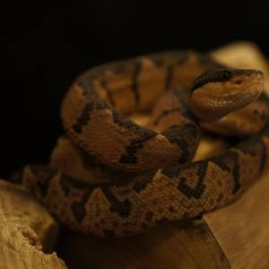 Nieuwe slangen in GIF expo