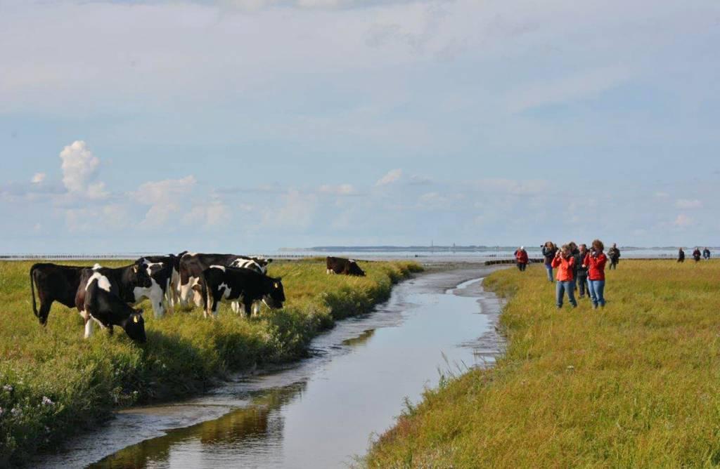 It Fryske Gea is de provinciale vereniging voor natuurbescherming in Fryslân. Zij heeft als doel bescherming, behoud en ontwikkeling van natuur, landschap en cultuurhistorisch erfgoed in Fryslân. De vereniging beheert momenteel meer dan zestig verschillende natuurgebieden - met een totale oppervlakte van ruim 20.000 hectare - verspreid over de hele provincie. In haar werk wordt de vereniging gesteund door circa 35.000 leden.