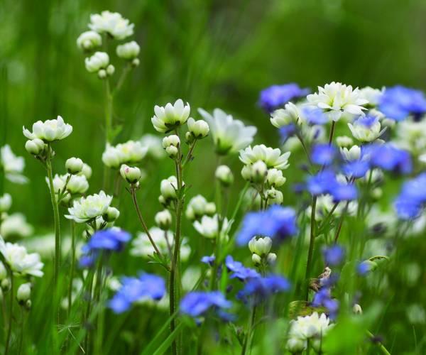 Stinzenflorapark Martenastate Koarnjum beste 'hotspot' van Nederland