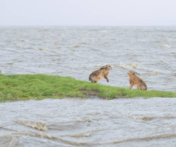 Piet Blokland winnaar eerste jubileum-fotowedstrijd It Fryske Gea