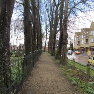 Red de bomen van de Sint Vituskerk in Stiens