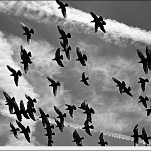 """P.v  De """" Vliegende Post """" begonnen aan het laatste onderdeel: De Natoer!"""