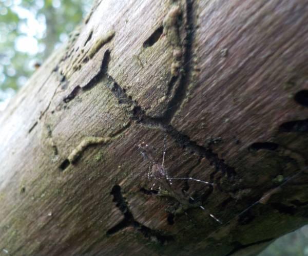Natuurbeleving in Noardeast-Fryslan