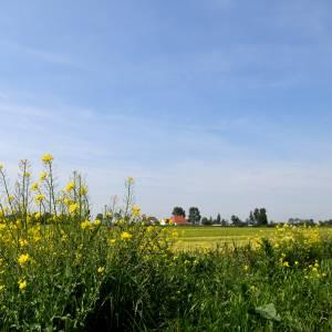 Fryslân presenteert voortgangsrapportage stikstof
